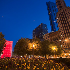 Millenium Park by Cristobal Garciaferro Rubio - Buildings & Architecture Office Buildings & Hotels ( park, millenium park, tulip, tulips, chicago, usa )