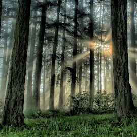 Searchlights by Corinne Hurt - Landscapes Forests