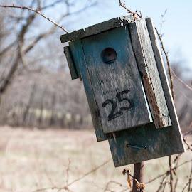 Birdhouse 25 by Eva Pastor - City,  Street & Park  Vistas ( green, birdhouse, 25 )