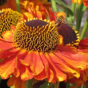 Beauty by Viive Selg - Flowers Flower Gardens (  )