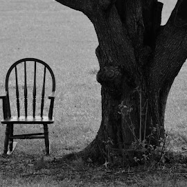 Rock by Lauren N. - Artistic Objects Furniture ( chair, tree, nature, black and white, outdoors, outside )