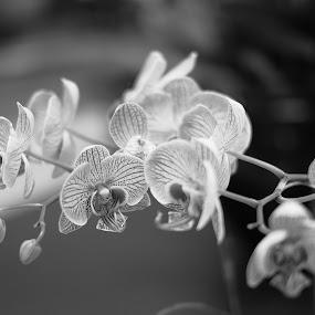 by Kitkat Katrina - Flowers Flower Gardens