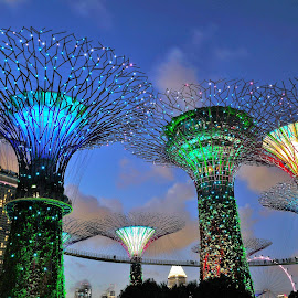 Super Trees by Koh Chip Whye - City,  Street & Park  City Parks (  )