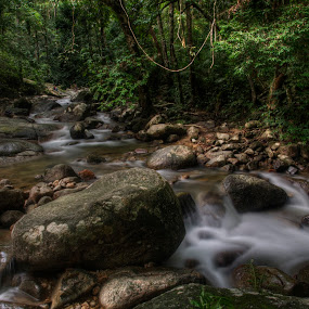 After raining by Ariff Ismail - Landscapes Forests