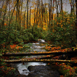 by  Jeff Hunking - Landscapes Forests