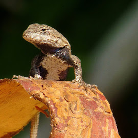 Summer Sunning by Christine Keaton - Animals Reptiles