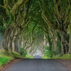 The Dark Hedges by Nick Johnson - Landscapes Forests ( ireland, green, street, trees, dark hedges )