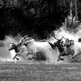 MOICHARA by Jugal Das - Black & White Sports