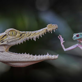 Waaaatttaaaaaa...!!! by Vincent Sinaga - Digital Art Animals ( frog, crocodile, fighting, reptile, green frog, animal )