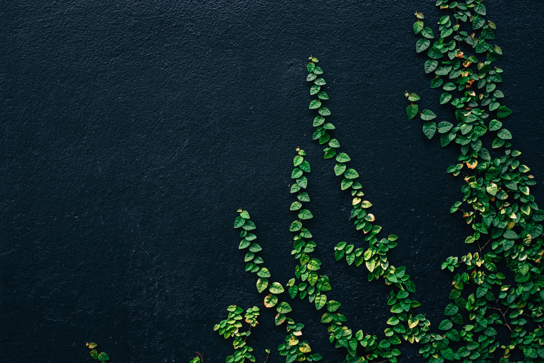 Saiba tudo sobre sustentabilidade corporativa e como ela pode impactar a sua empresa