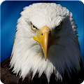 Ultimate Eagle Simulator 3d