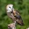Owl Watching  06 05 18.jpg