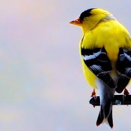 by Don Mann - Animals Birds