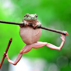 ciaatt by Sandi Nopri yanto - Animals Amphibians