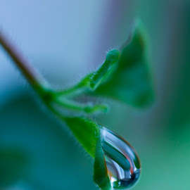 Water drop reflecting colors by Mikaela Friberg - Novices Only Macro ( plant, water, drop, green, clearwater, leaf, close up, clear, pure, macro, clean, freshness, raindrop, natural,  )