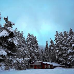 Зимно утро by Dobrinka Ivanova - Landscapes Weather ( зима, утро, планина )