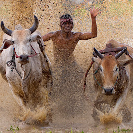 The dance of a jockey by Zairi Waldani - Sports & Fitness Rodeo/Bull Riding