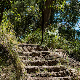 10102016_3796 by Deborah Bisley - Nature Up Close Rock & Stone ( native, path, trees, stone, forest, steps )