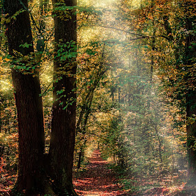 Paths through the woods by Zaharescu Dragos - Landscapes Forests