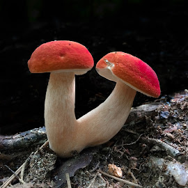 Twin Mushrooms by Tyrell Heaton - Instagram & Mobile iPhone