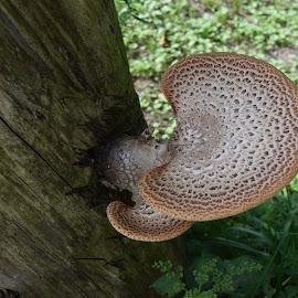 Spotted Mushroom by John Tuttle - Nature Up Close Mushrooms & Fungi ( mushroom, plant, fungi, stump, wood, grass, log,  )