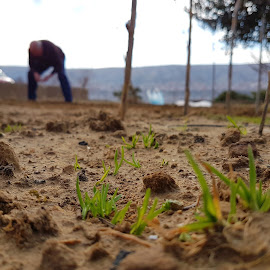 farming by Ivan Majić - Nature Up Close Gardens & Produce ( ground cover, grass, green, people, farming )