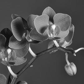 Purple Iris by Simon Hall - Black & White Flowers & Plants (  )