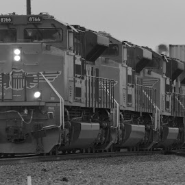 Four of a Kind by Joseph Gonzales - Transportation Trains ( diesel, railway, engine, black and white, railroad, locomotive, rail, track, train, union pacific, trains )