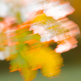Sunst blossoms by Wilma Michel - Abstract Light Painting