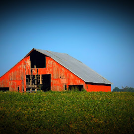 Red Barn by Lorna Littrell - Buildings & Architecture Other Exteriors ( field, farm, red, barn, harvest )