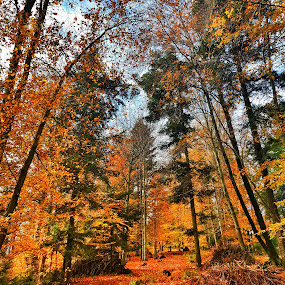 Fall fire by Andreja Svenšek - Landscapes Forests ( tree, autumn, fall, trees, forest, leaves, woods, fire,  )