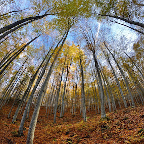 Autumn dream by Lucian Satmarean - Landscapes Forests ( fisheye, autumn, fall, trees, forest )