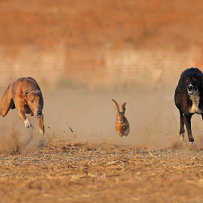 Race for life by Zahoor Salmi - Animals Other Mammals ( animals, nature, wildlife, zahoorsalmi, birds )