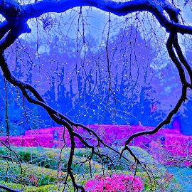 Purple Heart by Glen John Terry  - Abstract Patterns ( deep purple, purple, purple heart,  )