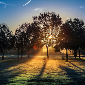Wireless Sun by Sorin Bogdan - Landscapes Sunsets & Sunrises ( canon, uk, winter, london, fog, autumn, grass, trees, northolt, sunrise, gb )