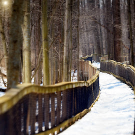 Nature Trail by Sandra Hilton Wagner - Landscapes Forests ( guard rails, cold, nature, snow, path, forest, bridge, treas )