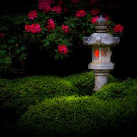 Midnight Glow by Briand Sanderson - City,  Street & Park  Night ( lantern, rhododendron, japanese garden, japanese lantern, night, glowing, evening, nightscape )