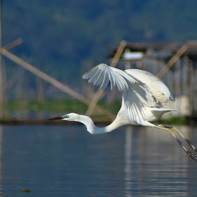 leave by Rusman Budi Prasetyo - Animals Birds ( bird, wildlife,  )