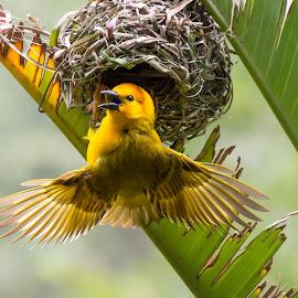 by Joe Ellwood - Animals Birds