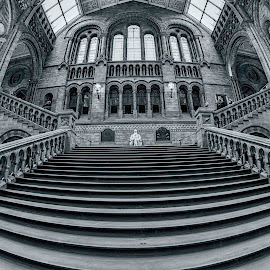 Natural History Museum by Carol Kheng - Buildings & Architecture Public & Historical ( #naturalhistorymuseum, #lines, #london, #stairs, #blackandwhite )