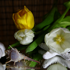 by Dipali S - Artistic Objects Still Life ( shells, spiked, decoration, tulip, white, artistic, yellow, seashells, natural )