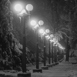 Avenie by Dušan Gajšek - City,  Street & Park  City Parks ( park, maribor, žled, narava )