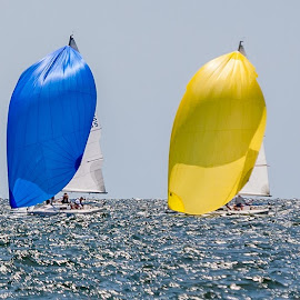 Five Spinkers by Carl Albro - Sports & Fitness Watersports ( colorful, sailboat racing, ocean, boat, sailboat )