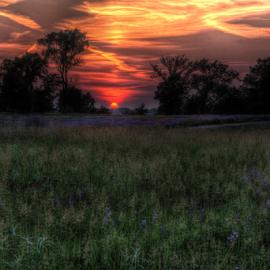 Meadow Sunset by Jill Beim - Landscapes Prairies, Meadows & Fields ( wildflowers, lupines, sunset, meadow, prairie,  )