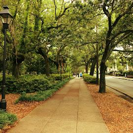 A City Walk, Savannah, GA by Avishek Bhattacharya - City,  Street & Park  City Parks