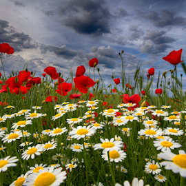 Color therapy by Adrian Urbanek - Flowers Flowers in the Wild