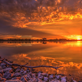 Log by Casey Mitchell - Landscapes Sunsets & Sunrises ( sunsets, sunset, reflections, lake, pond, log, reflect,  )