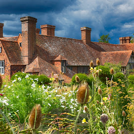 Home & Garden by Andrew Henderson - Buildings & Architecture Homes ( stormy, wild, old, overgrown, kent, plants, quintesential, roof, england, red, tiles, cottage, sunny, south, summer, weeds, flowers, garden, english, teasals )