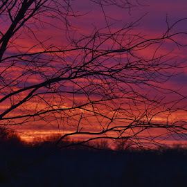 Winter Sunset Silhouette  by Matthew Beziat - Landscapes Sunsets & Sunrises ( pasadena, colorful sky, winter, tree silhouette, sunsets, sunset, silhouette, winter sky, anne arundel county, pasadena maryland, winter sunsets, evening )