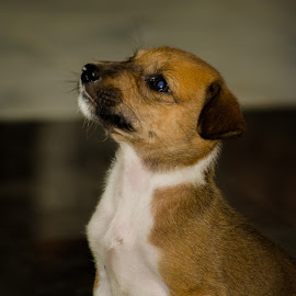 Puppy by Navin Kumar - Animals - Dogs Puppies